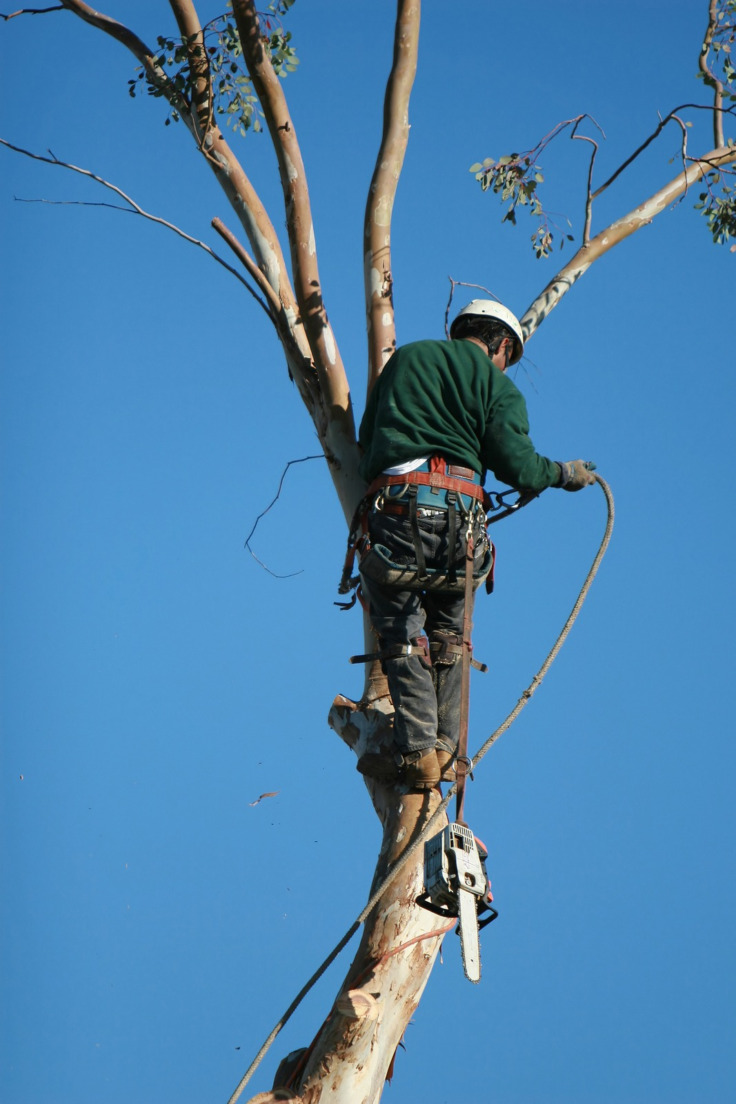 Find Tree Removal in Dallas & Back Mountain, PA